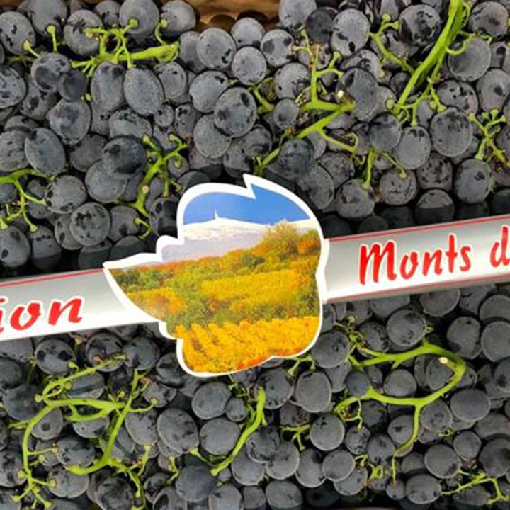 esc-prima-grapes-1.7.19.jpg