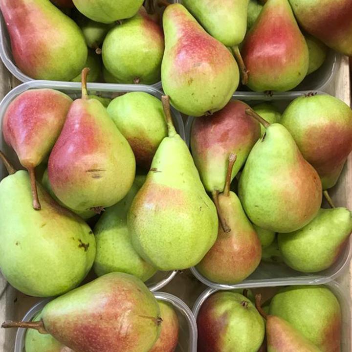 esc-coscia-pears-15.7.19.jpg