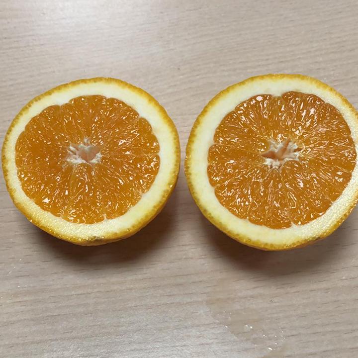 esc-orange-15.7.19.jpg