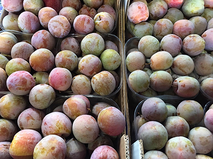 ITALIAN PLUMS - The Susine varieties at this time of year are at full sweetness! Susine Amole are sweet yellow plums. Susine Black Amber is another deep black sweet plum and the delicious Susine Sangue di Drago dragon plums are plentiful now.