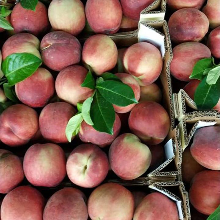 esc-peaches-2.8.19.jpg