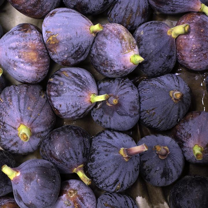 esc-figs-5.5.19.jpg