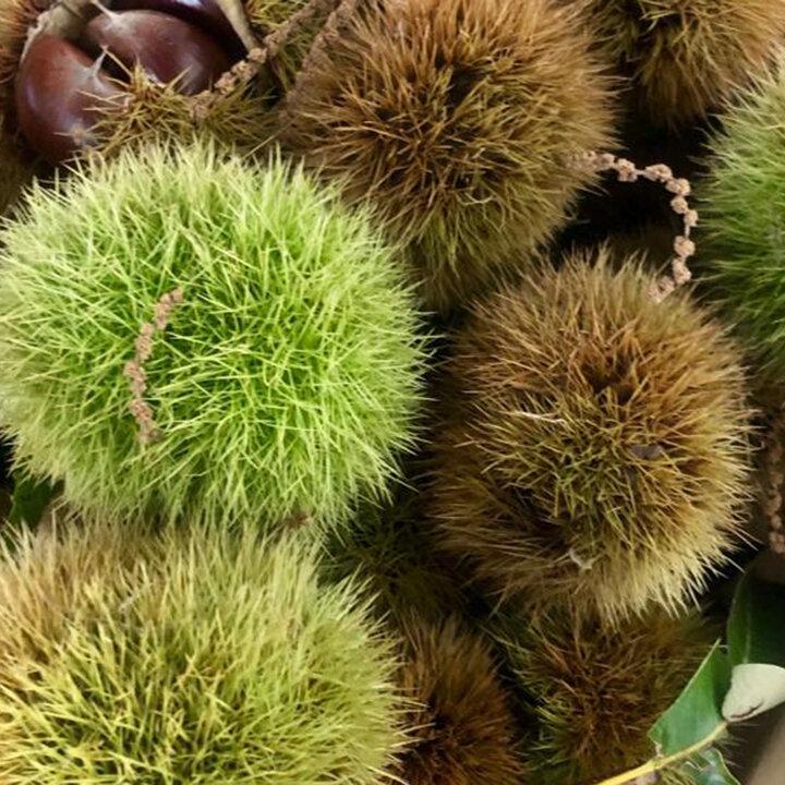 esc-chestnuts-20.9.19.jpg