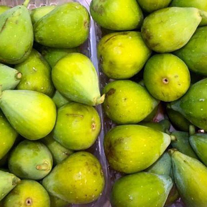 Green Figs