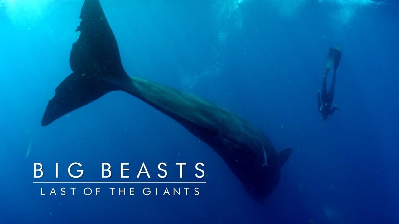 beasts_6.jpeg