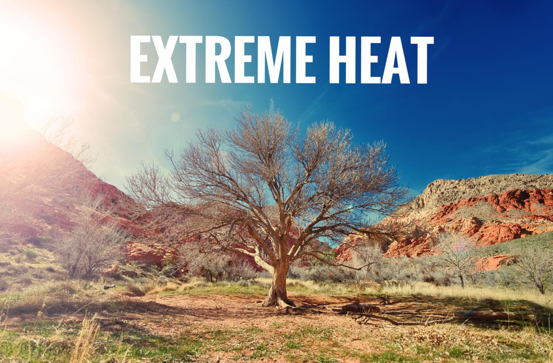 sun-desert-dry-tree.png