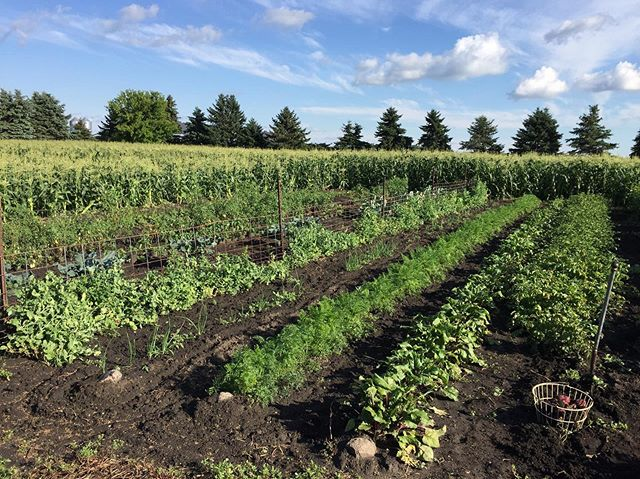 Hello everyone! This is @dereck_deutz with Columbia Imports and @deutzfamilyfarms following up with our Produce Subscription (CSA) this year. Thanks for your interest in receiving our farm fresh produce!  Your options are as follows: $300 for 16 weeks (July-October) $150 for 8 weeks (Bi-weekly) or $99 for Monthly.  You'll receive a box with the latest in season produce and can supplement it with the meats & eggs from our farm as well!  Please contact us at deutzfamilyfarms@gmail.com, Text (507-530-0765), or message us here with your name and option and we'll get you setup! *Reply today and we'll give you a free box of Rhubarb, Asparagus, and dozen Eggs!  Pick-ups will be at Columbia Imports on Mondays. (We can be flexible too.) You can pay over the phone, or at first pickup with cash, check, or card.  Thanks again for your interest! Looking forward to serving you this year! -Dereck Deutz
