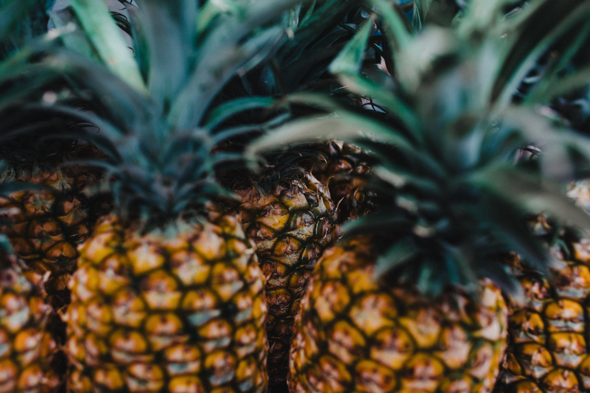 close up of pineapple in hawaii