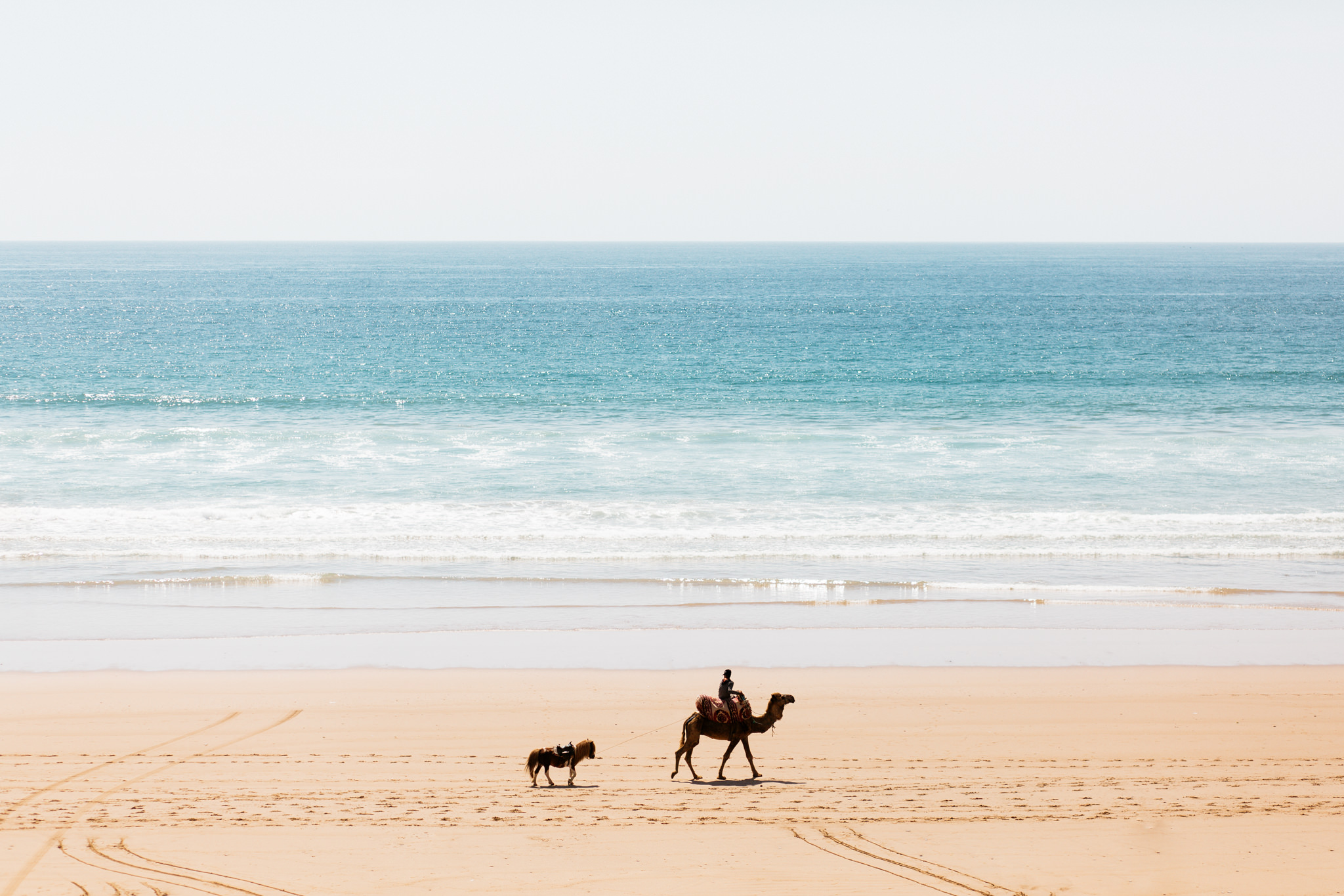 camel and horse walking on beach in morocco