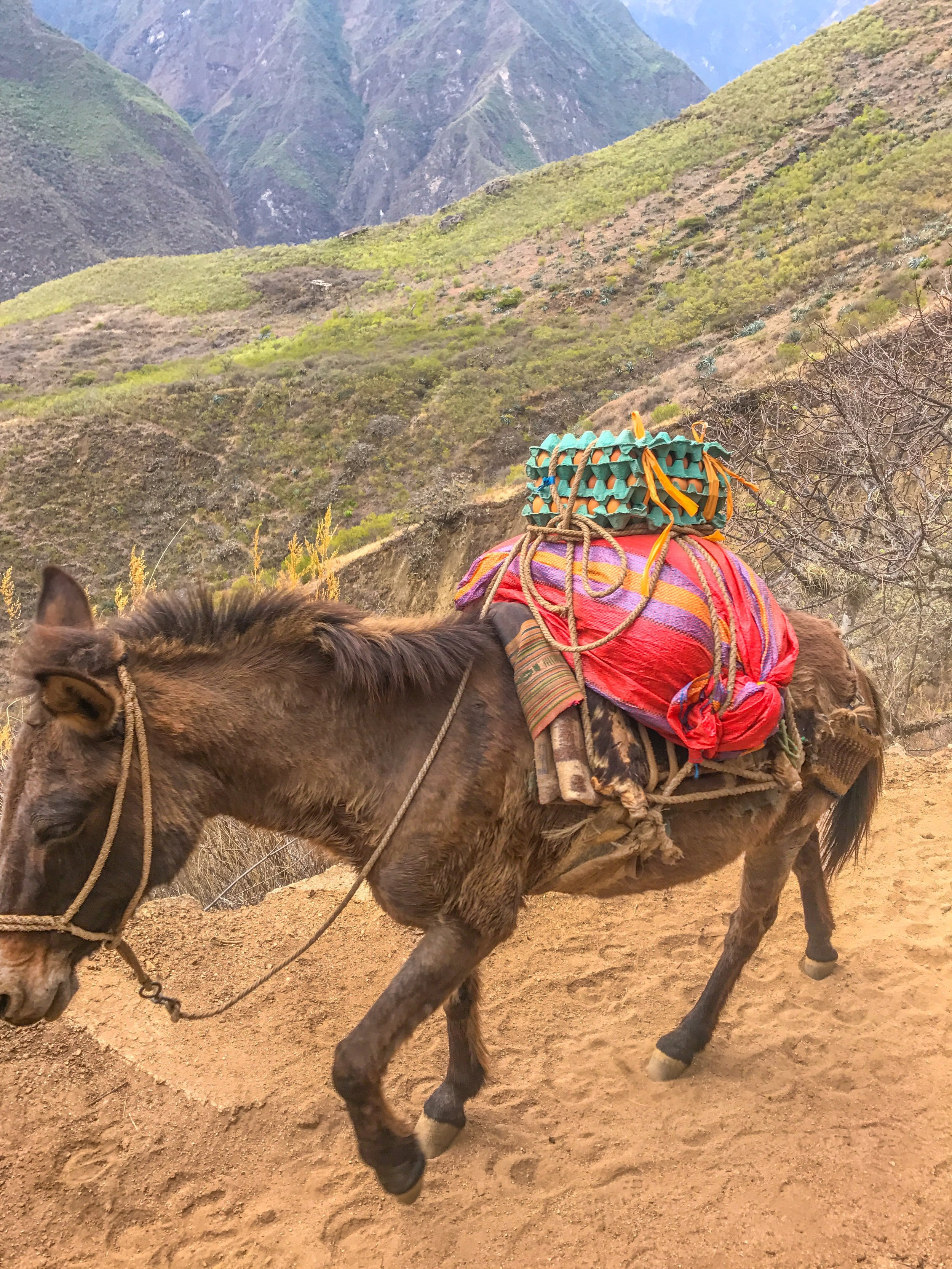 Egg delivery in the Andes mountains!