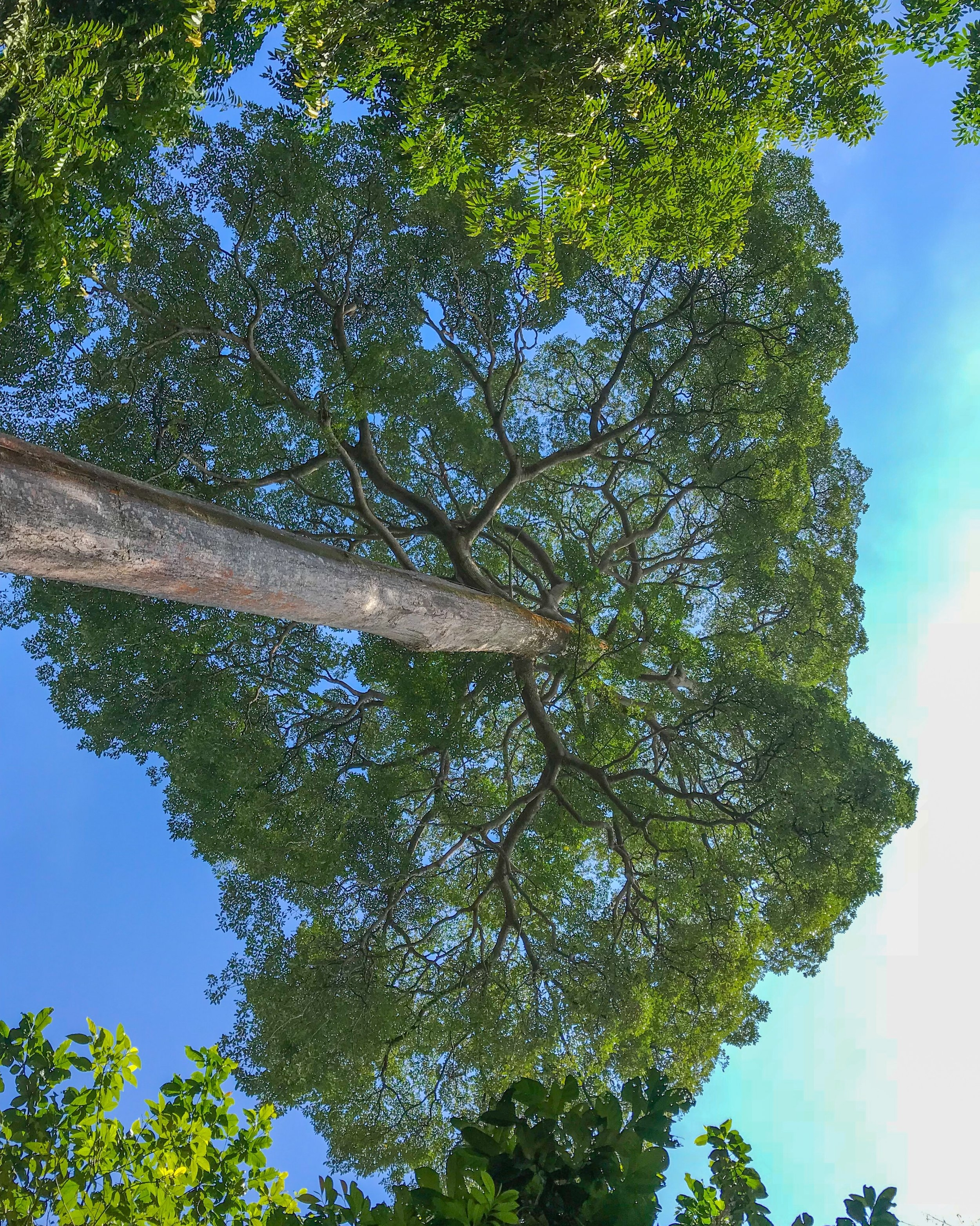 My favorite tree in Pulau Ubin