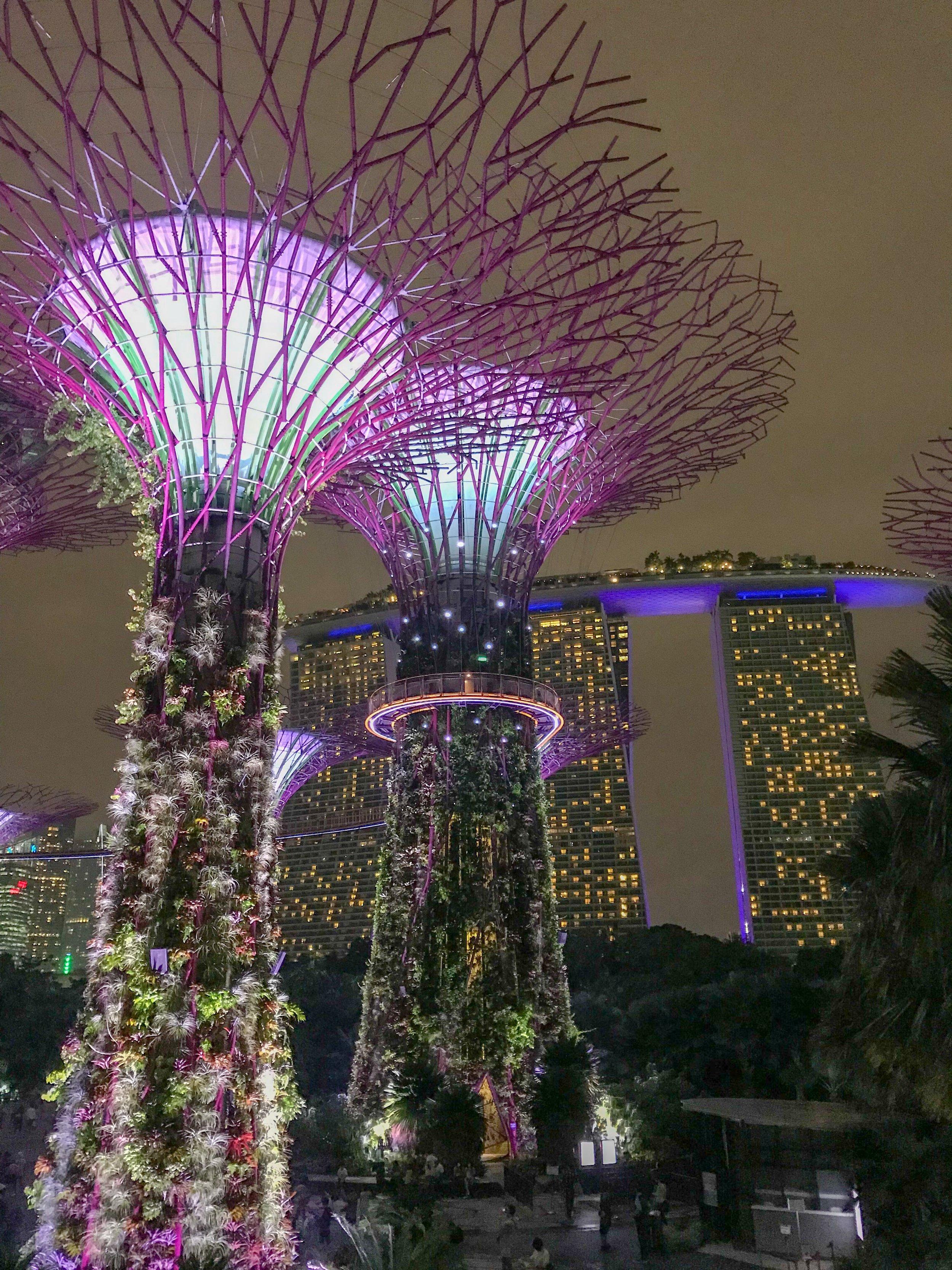 Gardens By the Bay & Marina Bay Sands Hotel