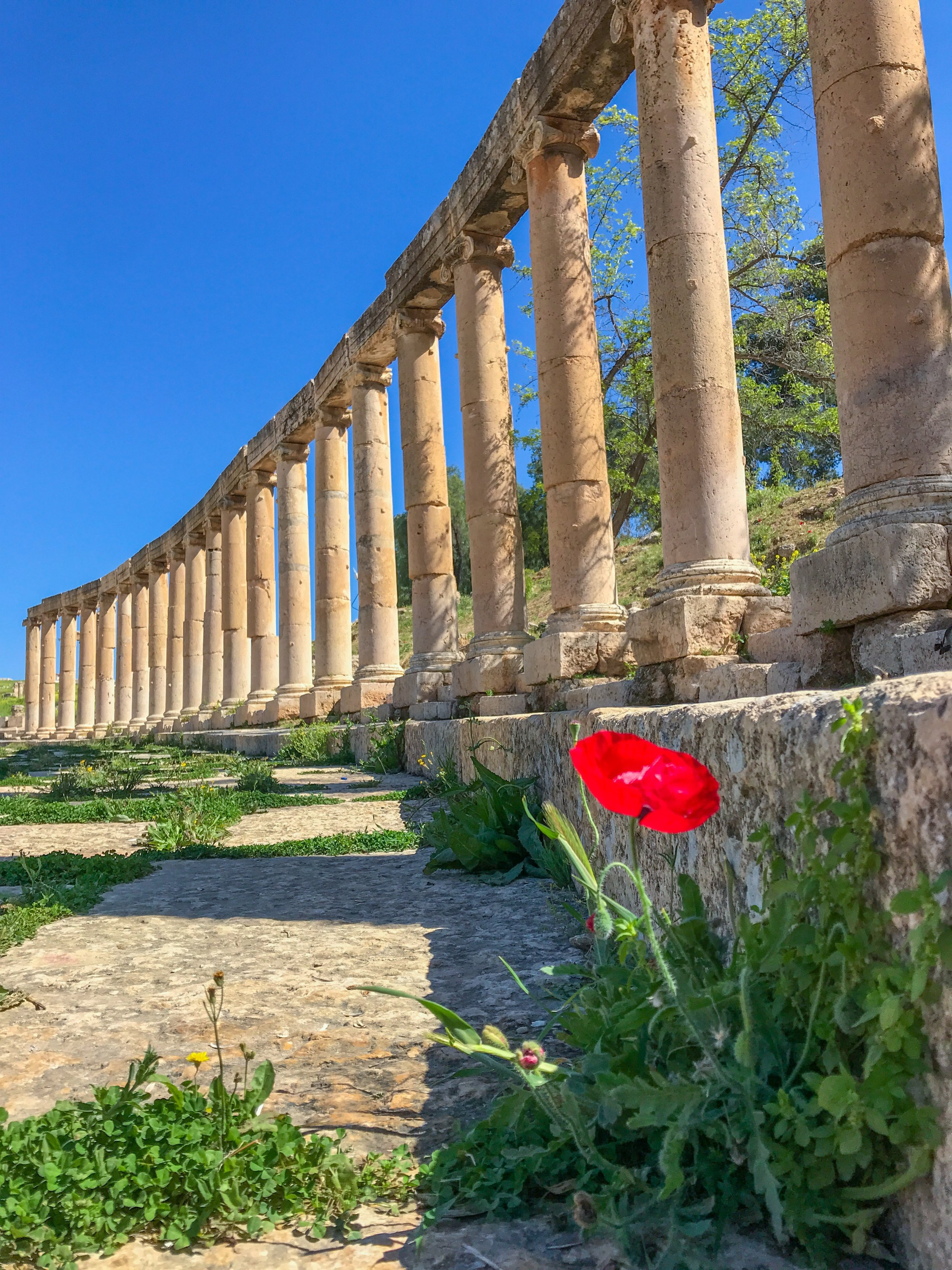 Jerash archeological ruins and all of Jordan is especially beautiful in the springtime.