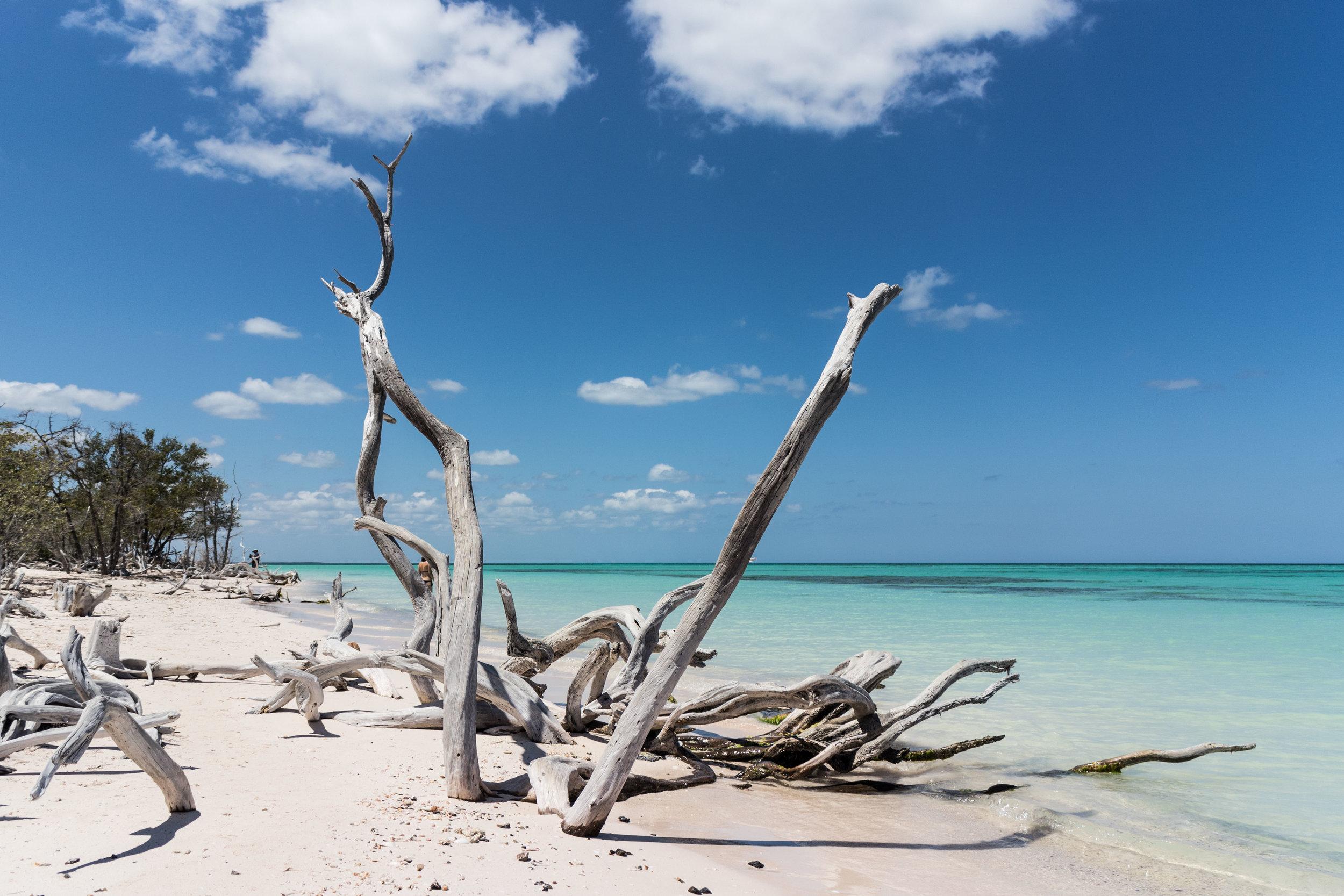 Cayo Jutias beach in Pinar del Rio