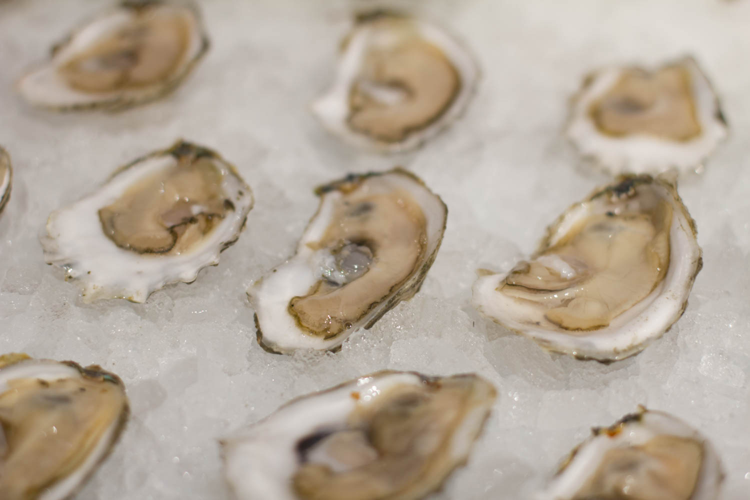 Oysters at Eataly's seafood counter.