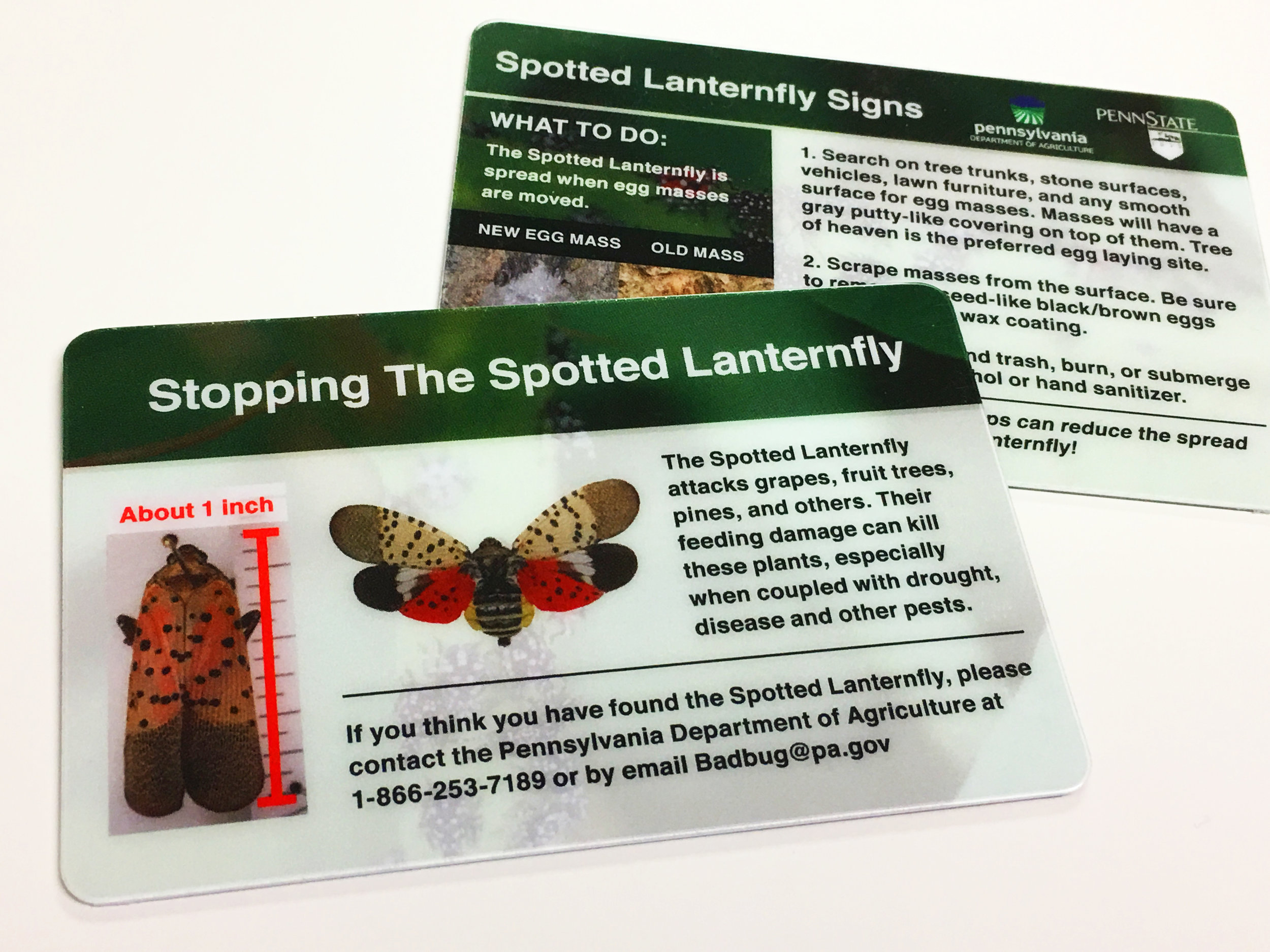 spotted_lanternfly_scraper_cards.jpg