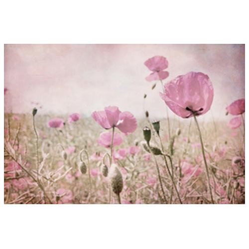 summer dream by Iris Lehnhardt