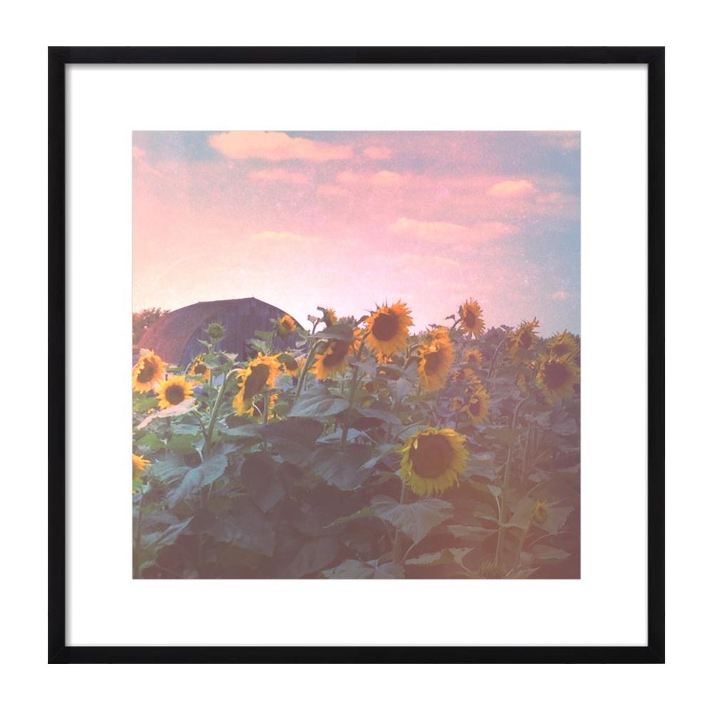 Evening Sunflower Field by Olivia Joy StClaire