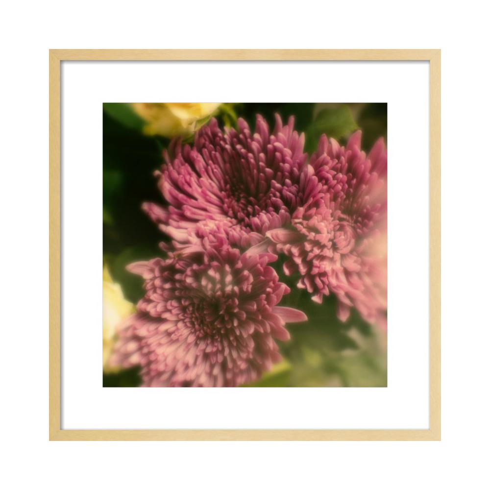 Bloom by Erik Melvin