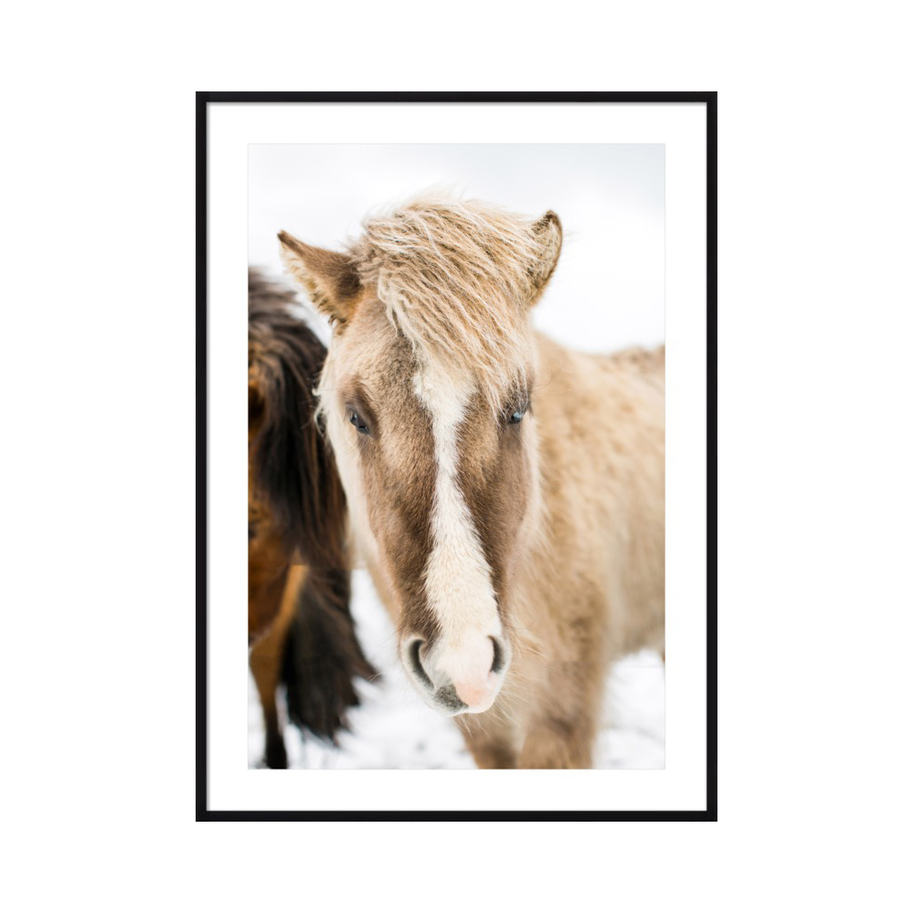 Icelandic Horse III by Robert and Tiffany Peterson