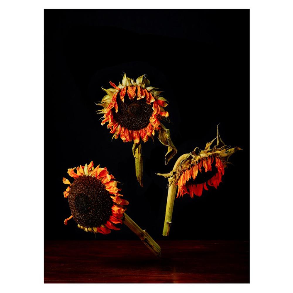 Sunflowers by Dustin Halleck
