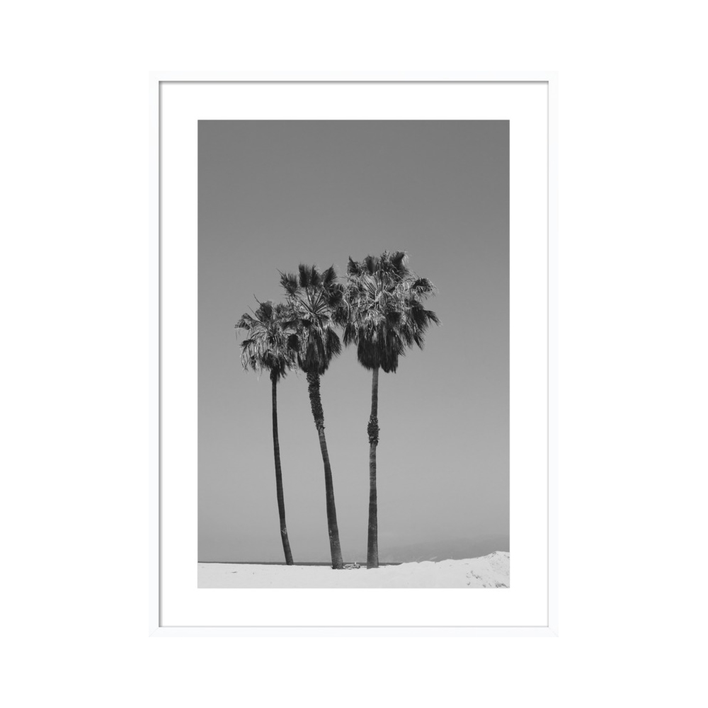Venice Palms by Catherine McDonald