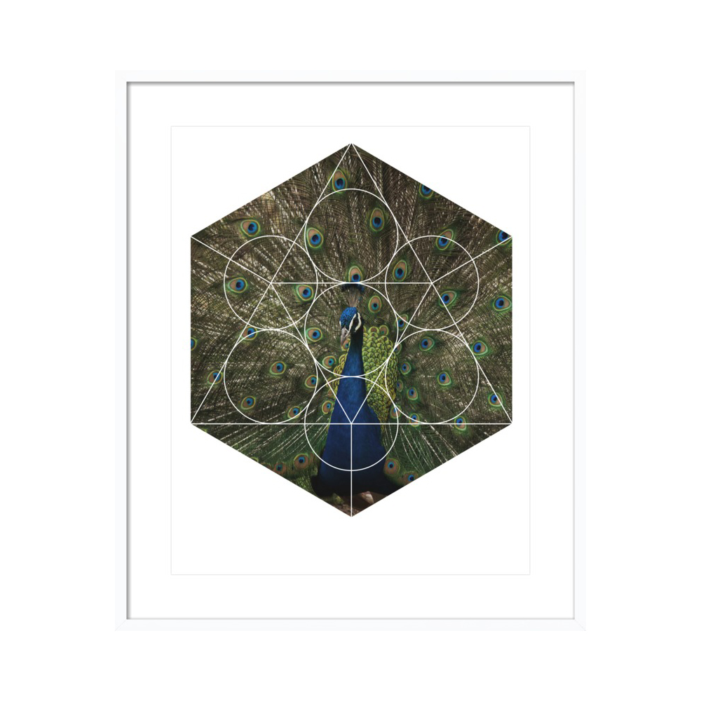Beautiful Peacock - Geometric Photography by Emiliano Deificus