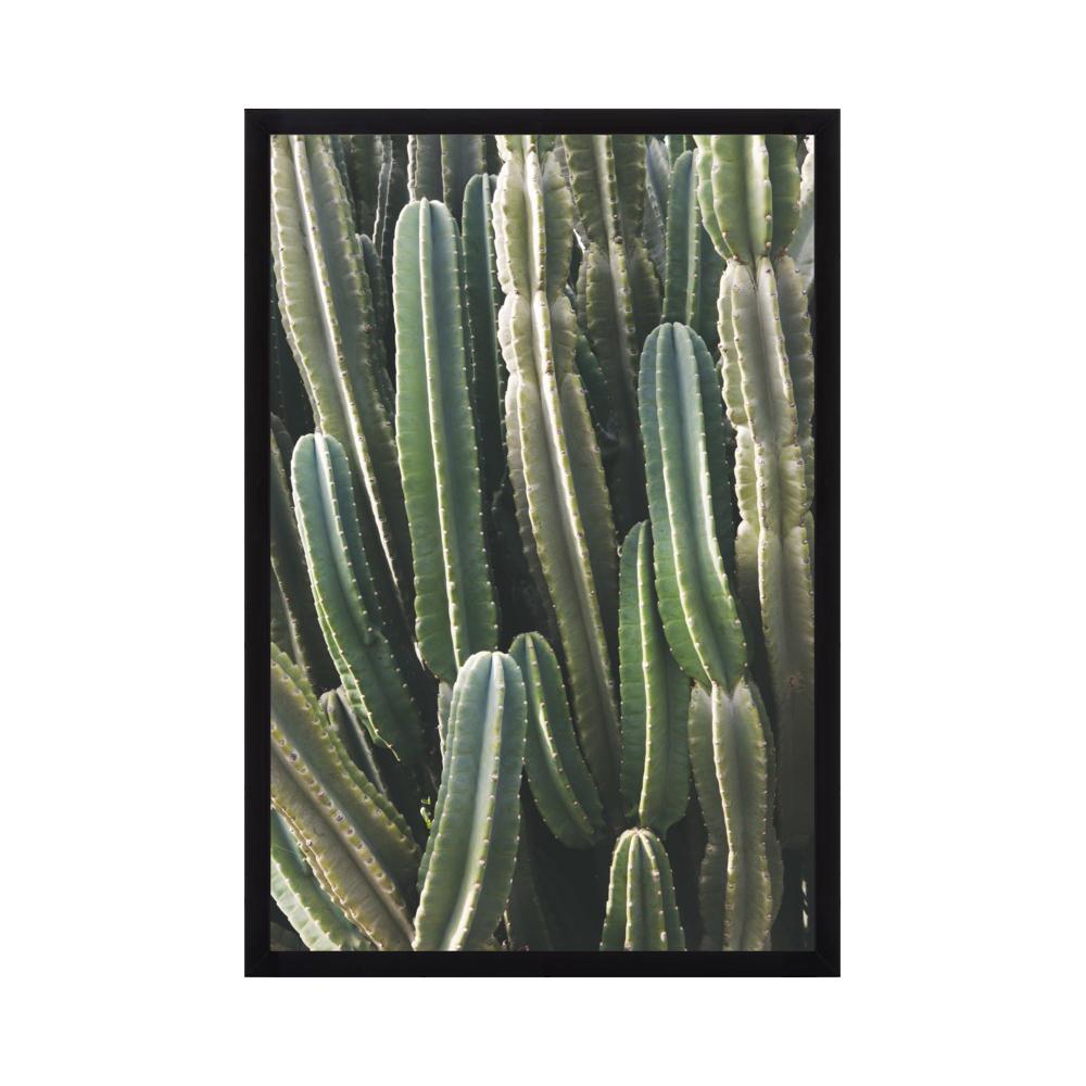 Southwest Cactus  BY CATHERINE MCDONALD