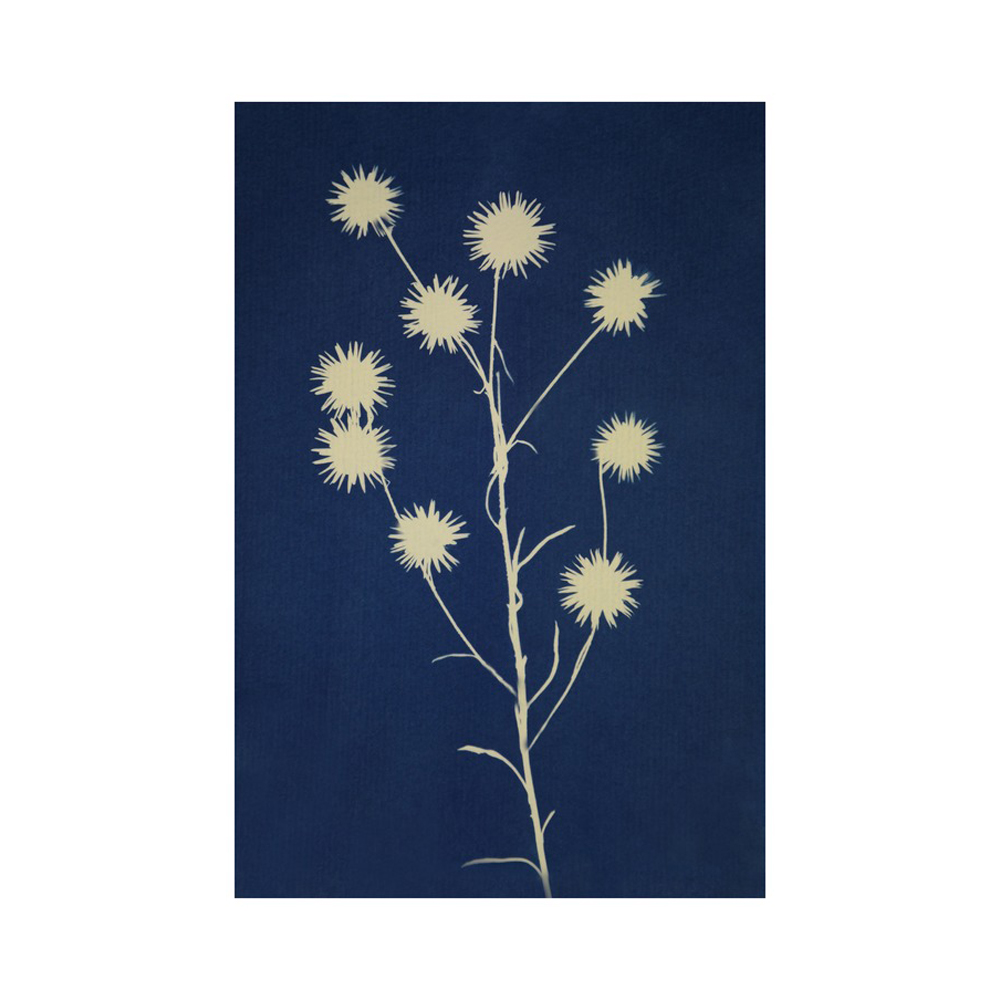 cyanotype flowers  BY YANIV ALON