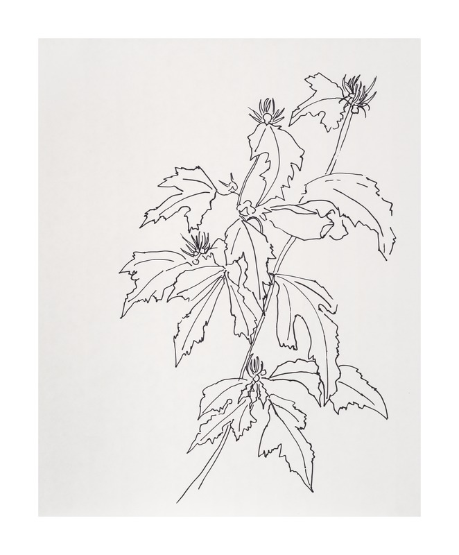 Leaves Rose of Sharon  BY CASEY CHALEM ANDERSON