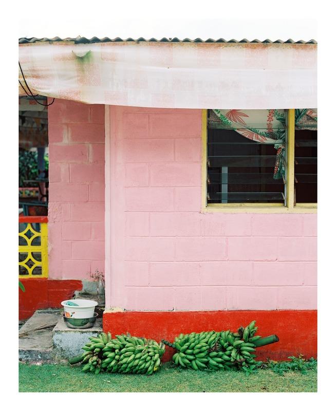 Banana's Ripening  BY ANDREW JACONA