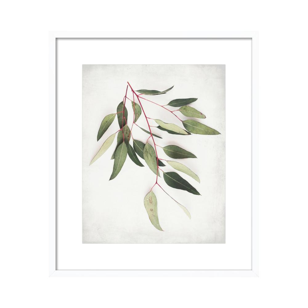 Eucalyptus Sprig One  BY LUPEN GRAINNE