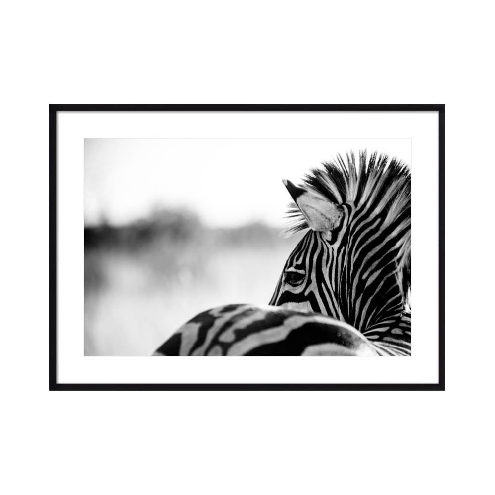 Abstract Zebra  BY BETH WOLD