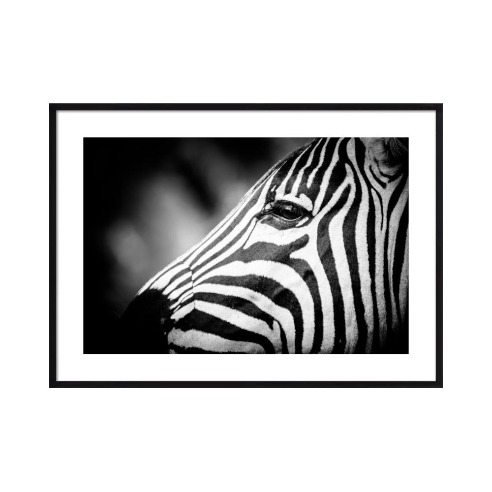 Zebra Eye  BY BETH WOLD