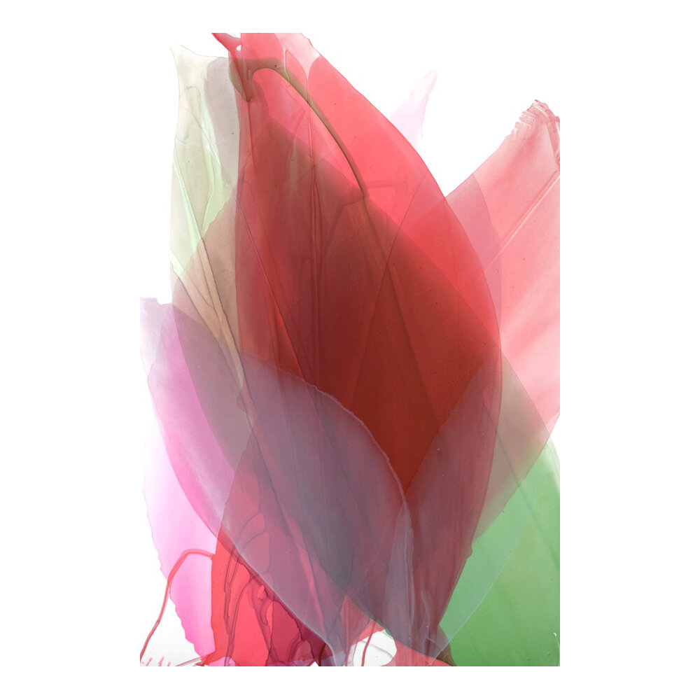 Southern Lily Red  BY MARINA DUNBAR
