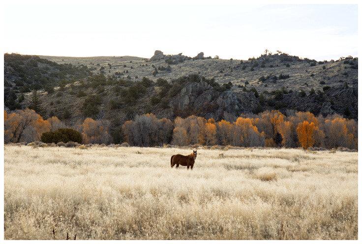 Fall Horse  BY NICK JAICOMO