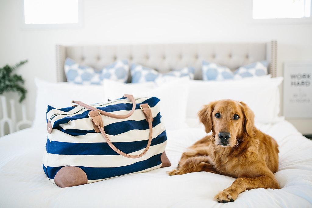 Master bedroom designed by an interior designer with a suitcase and a golden retriever on the bed.
