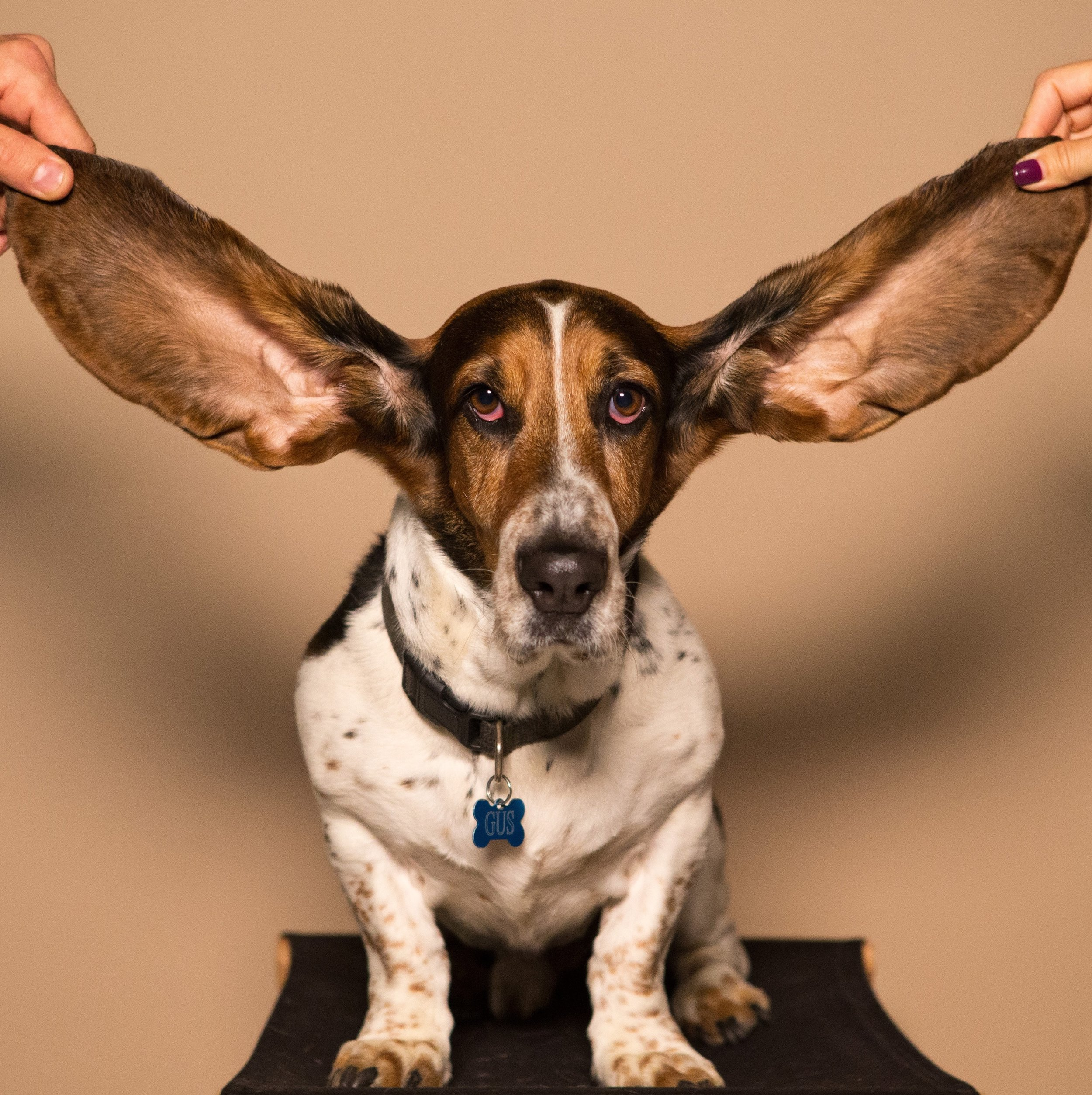 The Art of Listening (and How NOT to Give Advice)