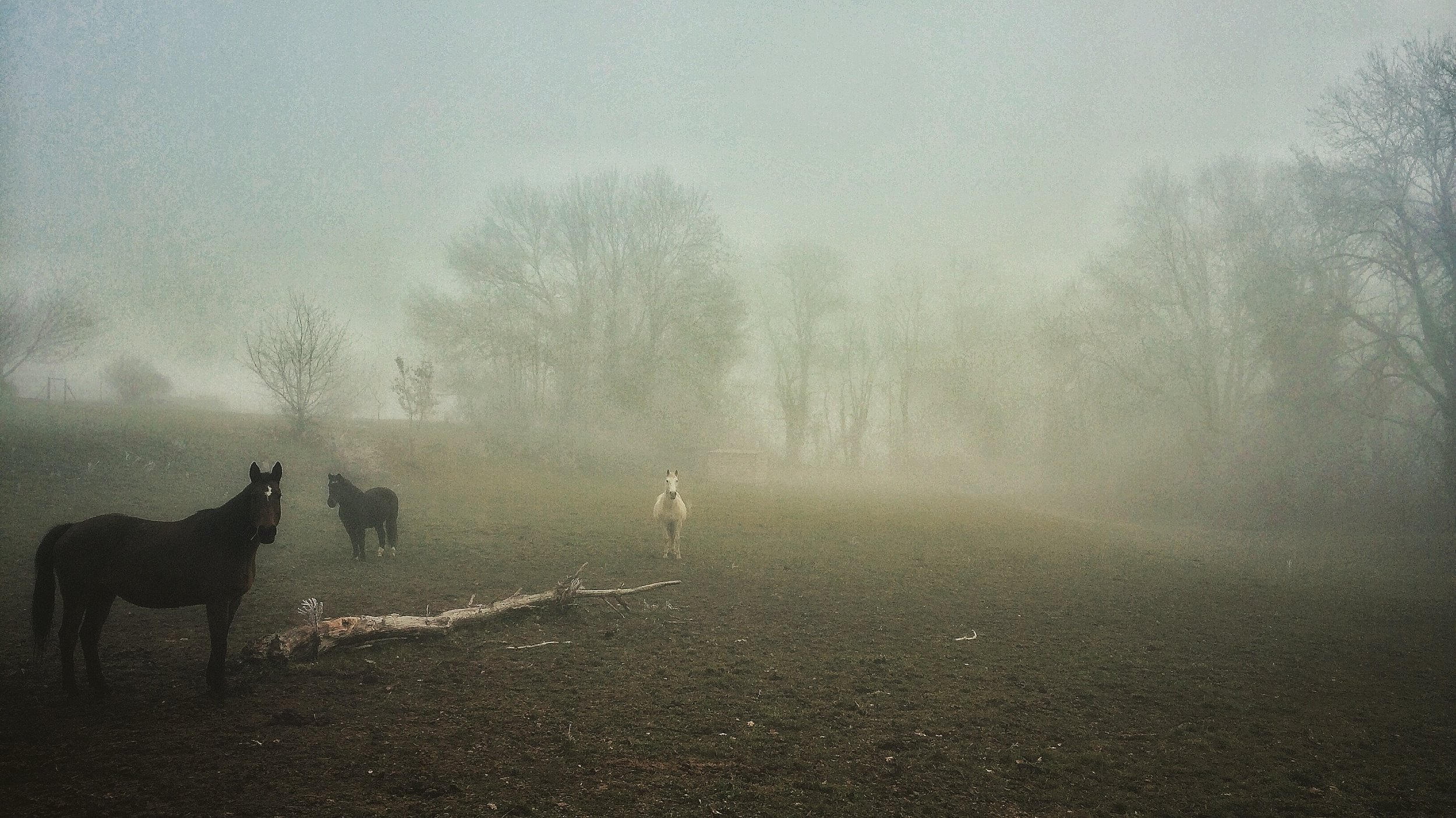Horses in the mist ©   Magali Chesnel