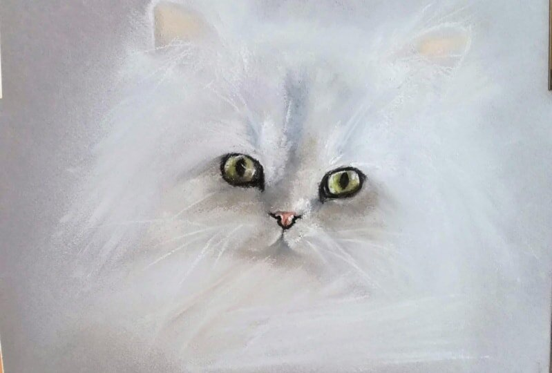 """Kate Amedeo's """"  Drawing Cats  """""""