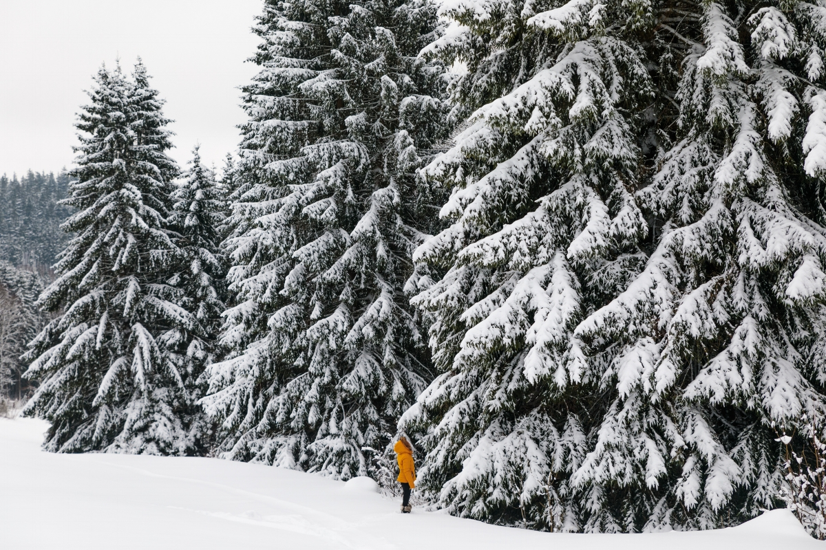 Thuringian Forest covered in snow // German Christmas Markets and Beyond: A Trip to Thuringia in December