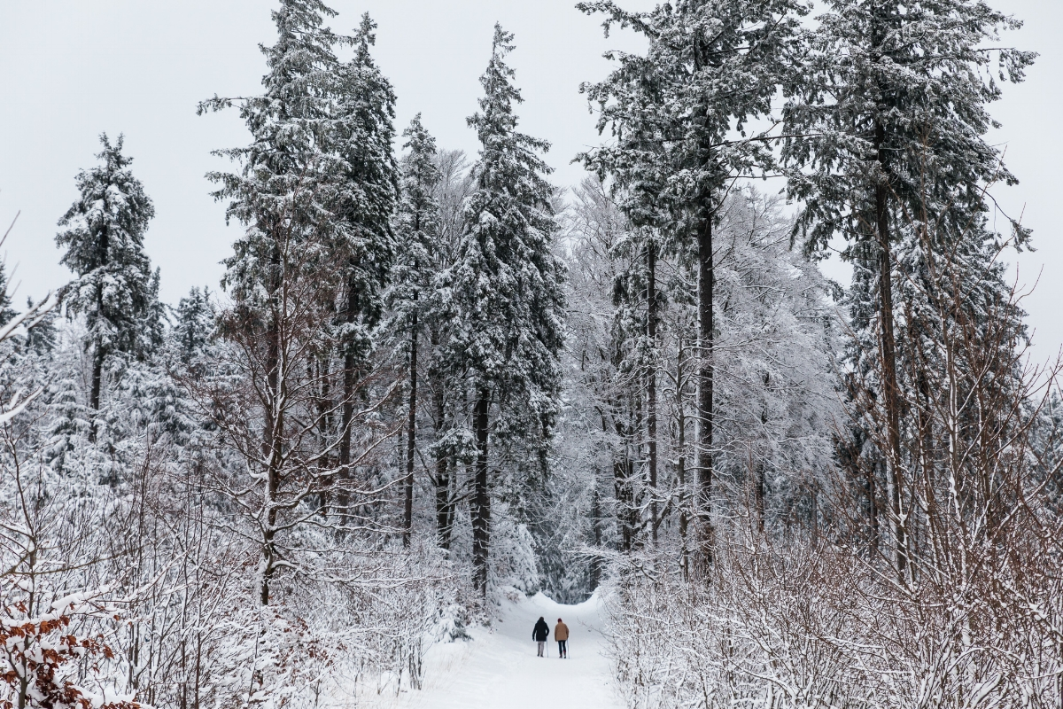 The grounds of Berg-und-Jagdhotel Gabelbach in the Thuringian Forest // German Christmas Markets and Beyond: A Trip to Thuringia in December