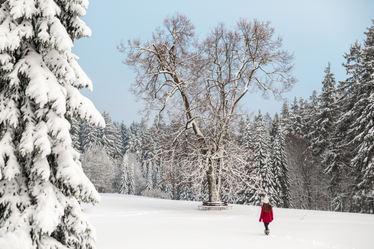 The grounds of Berg-und-Jagdhotel Gabelbach covered in snow // German Christmas Markets and Beyond: A Trip to Thuringia in December
