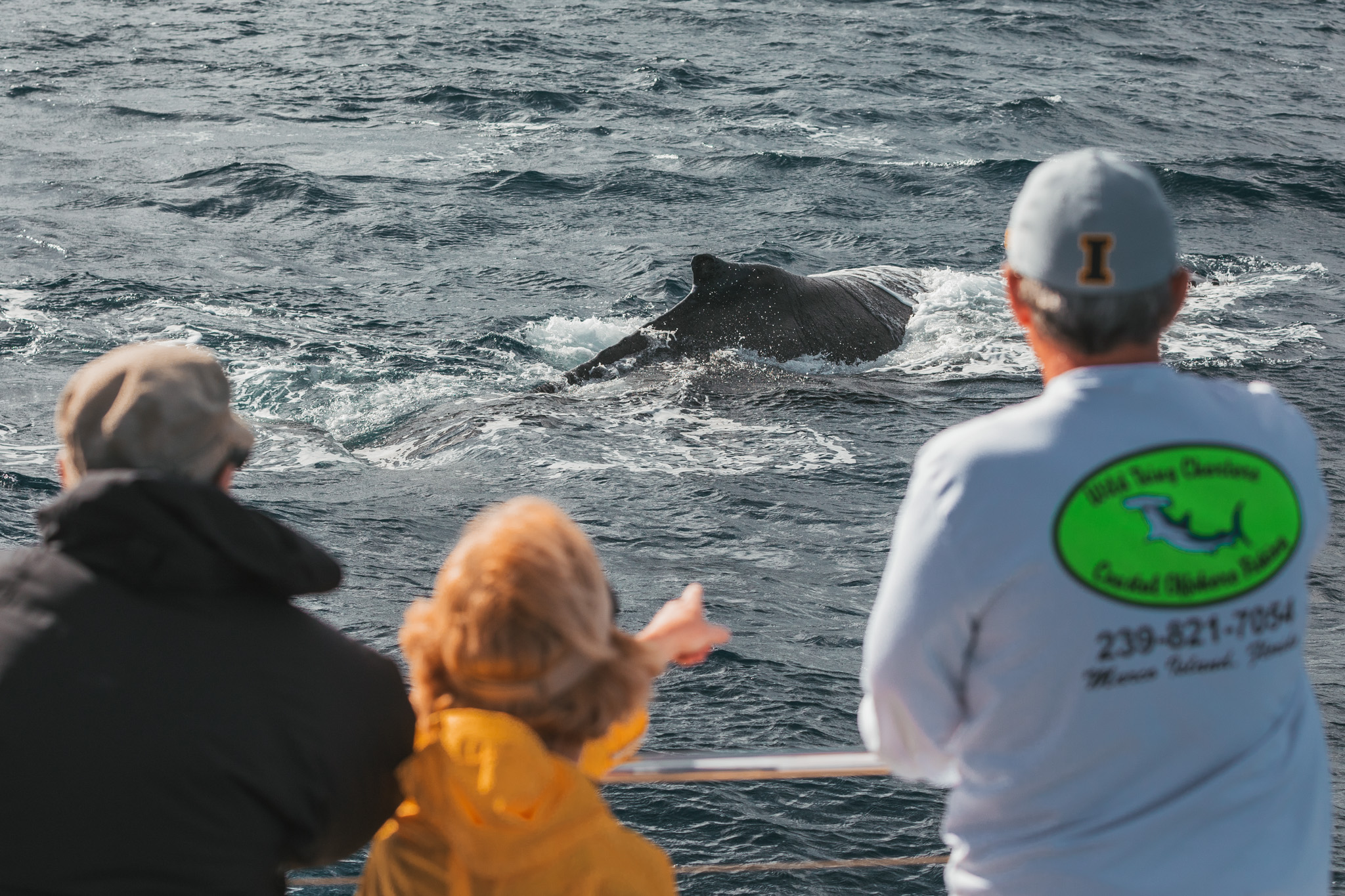 Whale watching  // 10 Things You Have to Do on the Big Island of Hawaii // www.readysetjetset.net #readysetjetset #hawaii #bigisland #blogpost #hawaiiguide