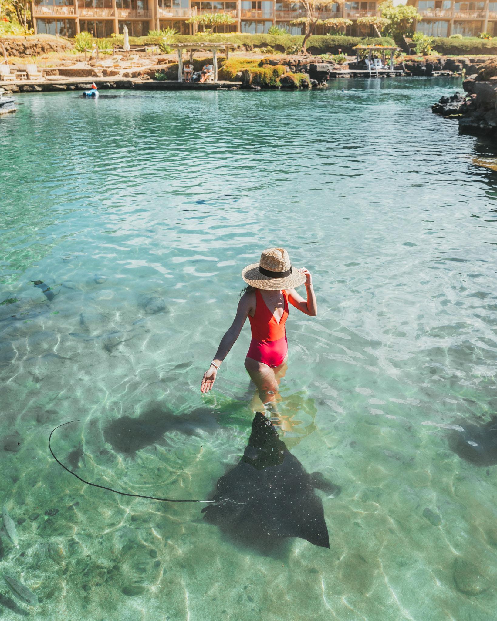 Eagle ray feeding at King's Pond // A Luxury Stay on the Big Island: Four Seasons Resort Hualalai // #readysetjetset #hawaii #bigisland #luxuryhotels #beachresorts #usa #travel