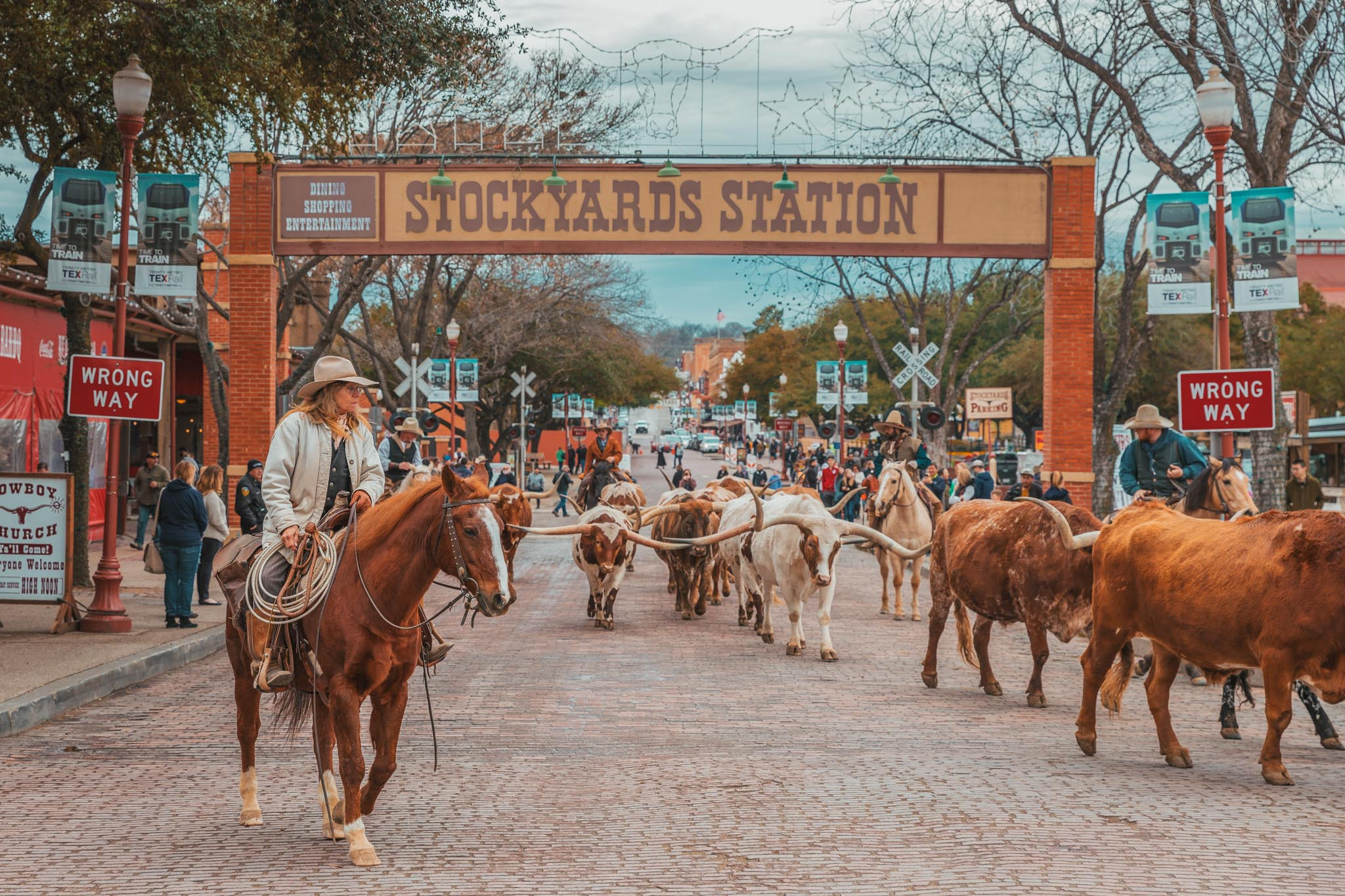 Fort Worth Herd twice-daily cattle drive at the Stockyards