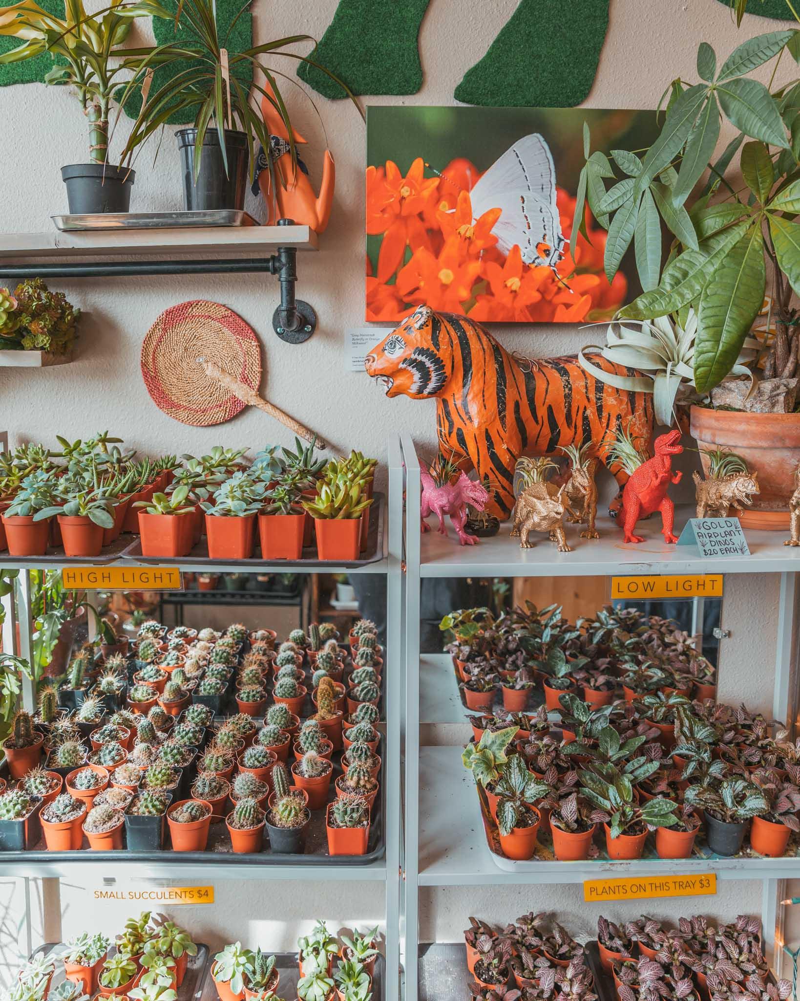 Ephemera Terrariums and Plant Craft cute store on Magnolia Avenue in Fort Worth, Texas