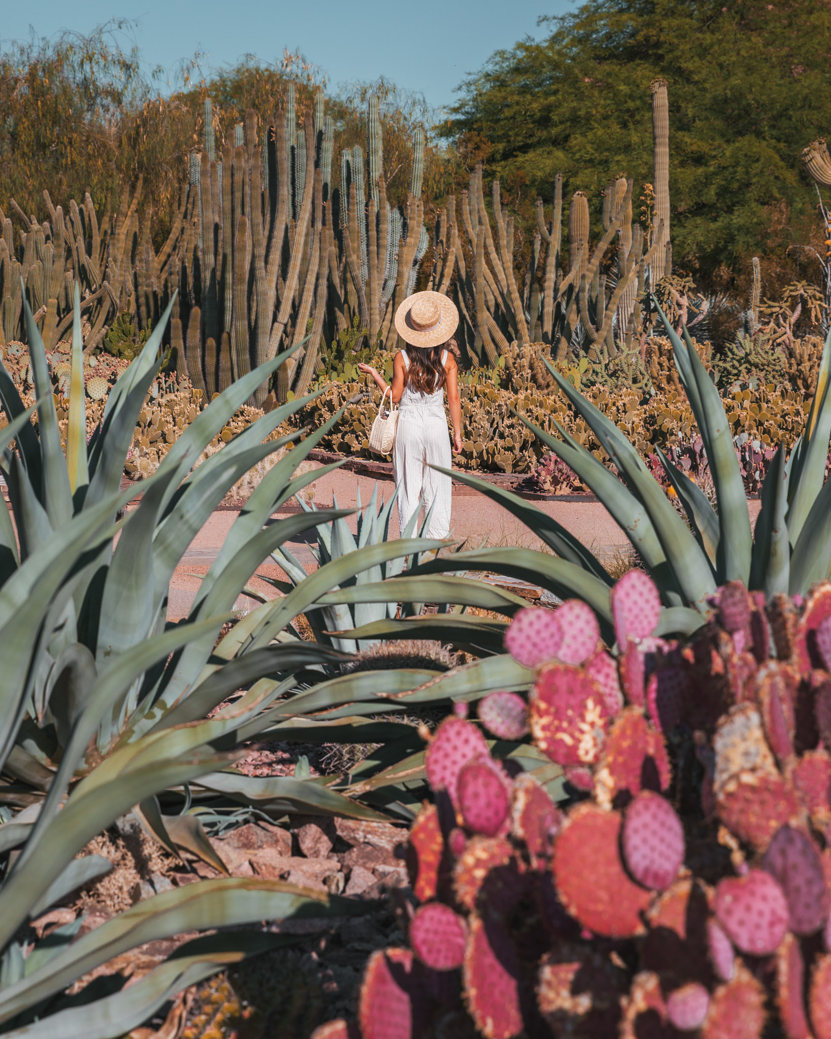 Cacti at the Desert Botanical Garden ~ The Quick Guide to Tempe, Arizona