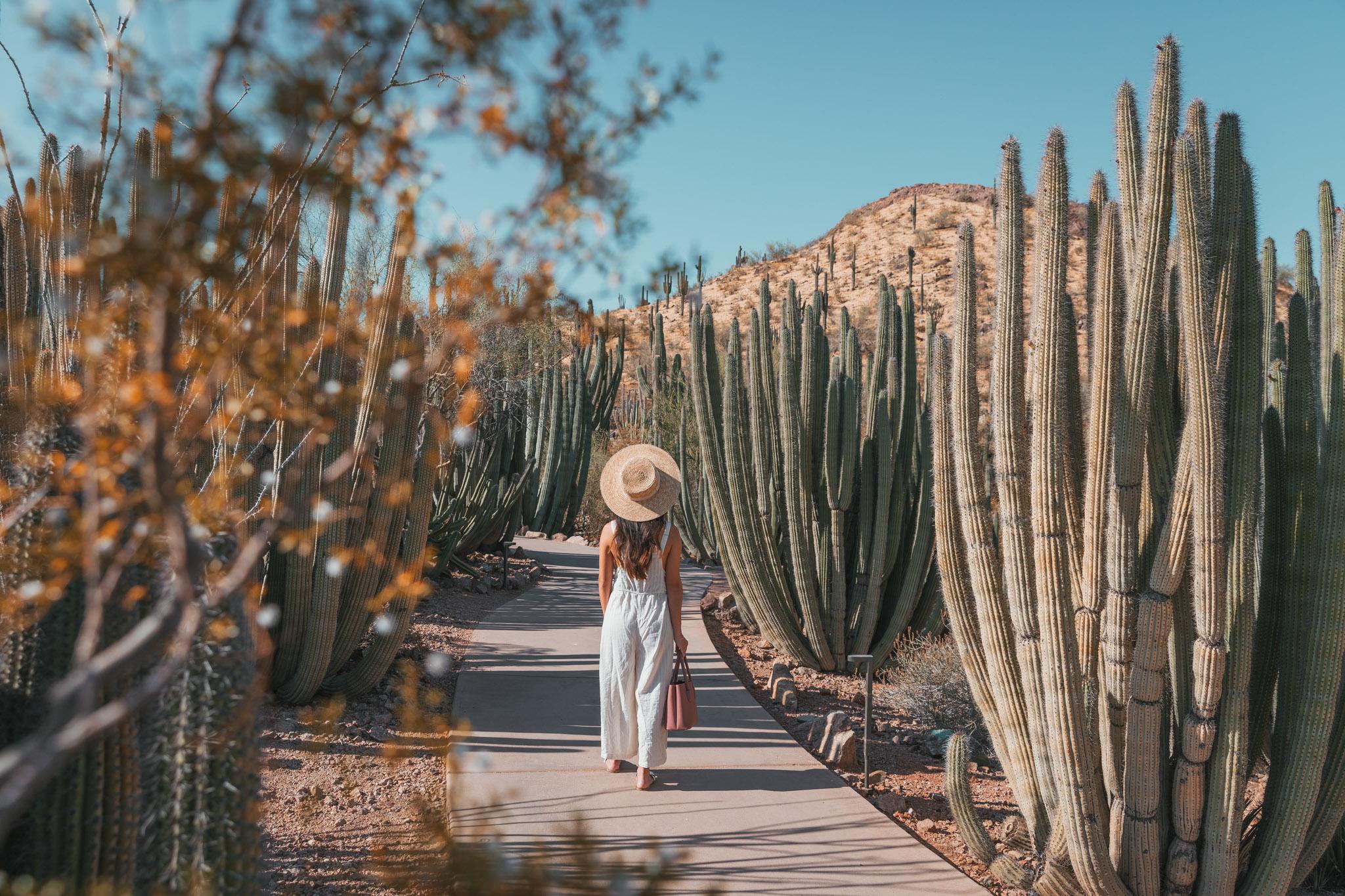 Phoenix Desert Botanical Garden ~ The Quick Guide to Tempe, Arizona
