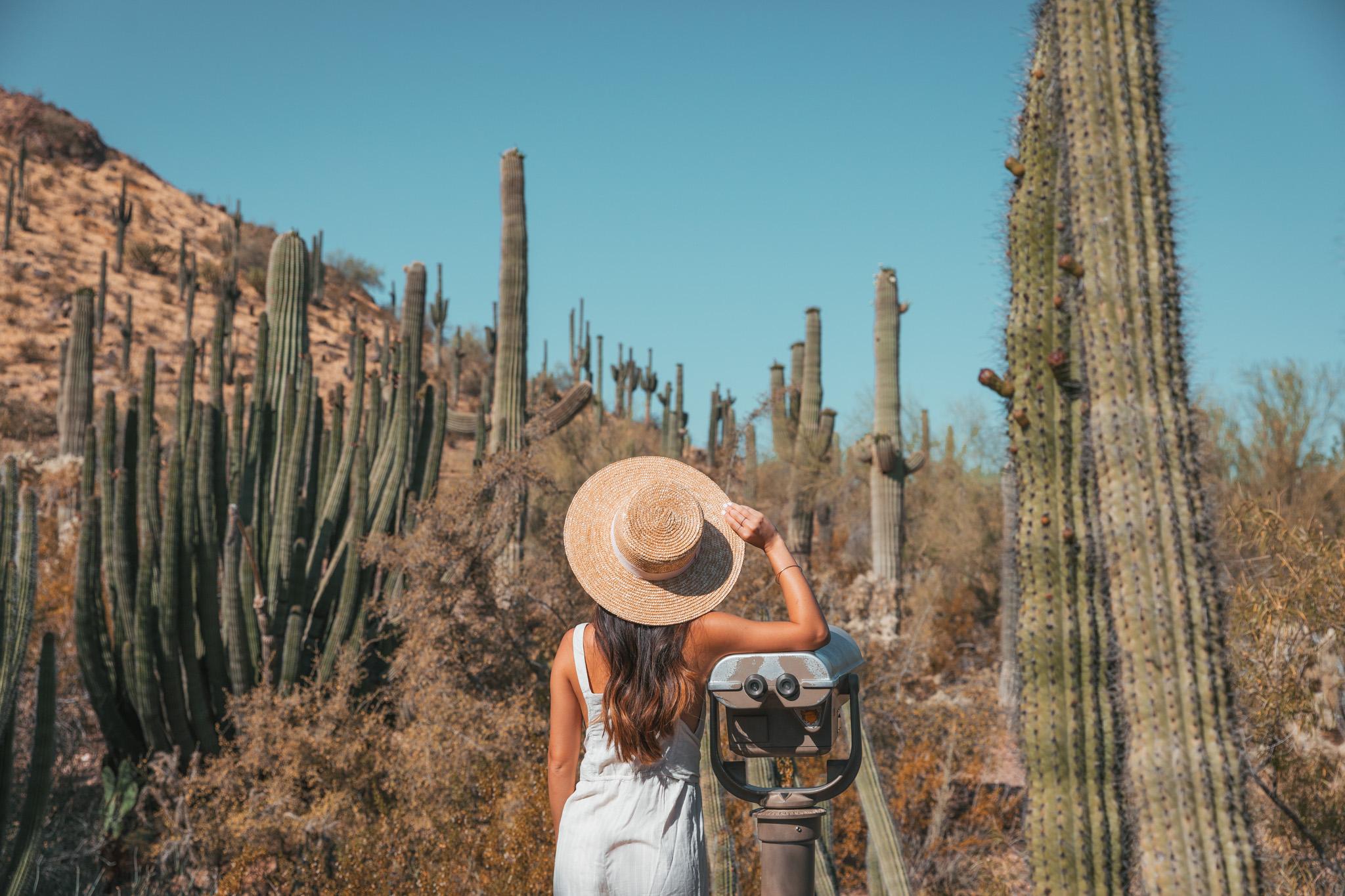 Desert Botanical Garden near Tempe in Phoenix ~ The Quick Guide to Tempe, Arizona